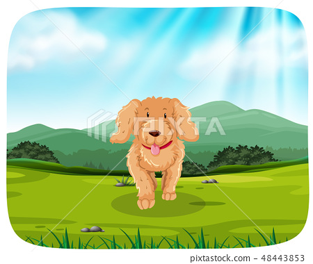 puppy running in park 48443853