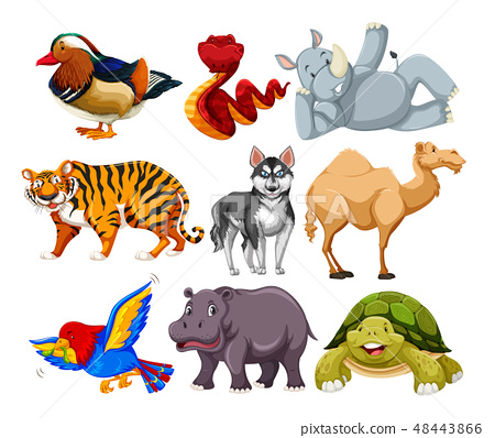 Set of different animal character 48443866