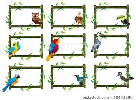 Set of birds in nature scenes 48443890