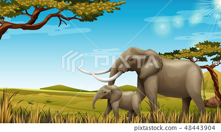 Pair of elephants in nature scene 48443904