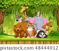 Set of wildlife animals 48444012