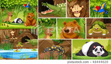 WIld animal in nature 48444020