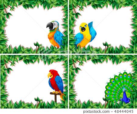 Set of bird frame 48444045