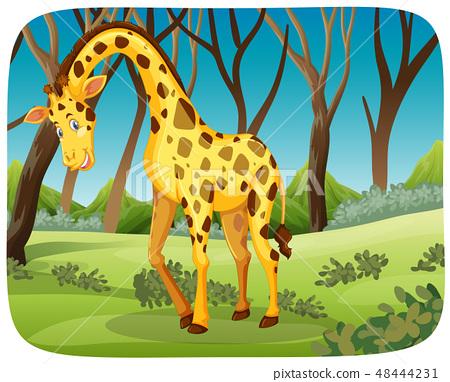 Happy giraffe in nature scene 48444231