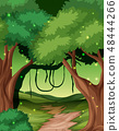 A tropical rainforest background 48444266