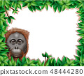 Monkey in leaf frame 48444280