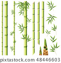 Bamboo stems and leaves 48446603