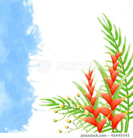 Watercolor background  bird of paradise flowers 48449345