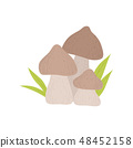 Forest Mushrooms, Wild Organic Product Vector Illustration 48452158