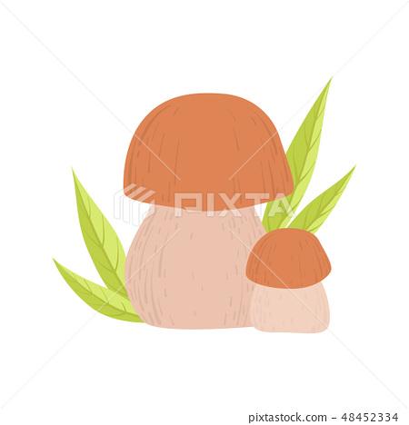 Forest Edible Cep Mushroom, Wild Organic Product Vector Illustration 48452334