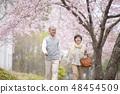벚꽃 속을 걷는 노인 부부 48454509