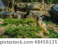 貓貓【動物】 48456135