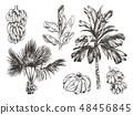 Vector Illustration of palm tree and banana fruit sketch for design, website, background, banner 48456845