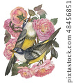 Vintage card with beautiful roses and two songbird. Can be used as invitation card for wedding 48456851