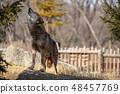 多摩动物园,Tyric Wolf(Hiroshi Wolf) 48457769
