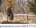多摩动物园,Tyric Wolf(Hiroshi Wolf) 48457770