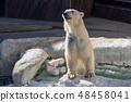북극곰 48458041