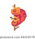 Orange chameleon sitting on a tree branch 48459578