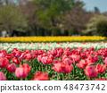 Omiya flower hill of spring Spring forest public garden (tulip field) 48473742