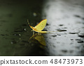 แมลงปอ Kageru แมลงแมโครขนาดเล็กสิ่งมีชีวิตแมลงฤดูร้อน 48473973