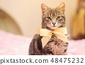 Beautiful gray tabby cat with a yellow bow-knot.  48475232