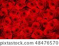 가득 빨간 장미 꽃 48476570