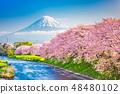 Mt. Fuji, Japan spring landscape. 48480102