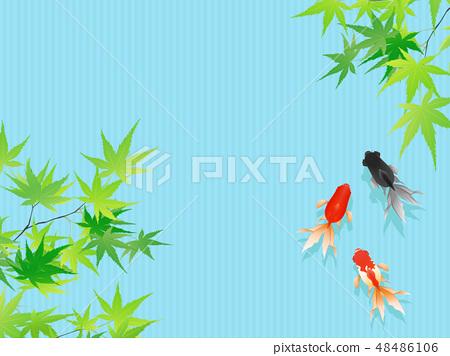 金魚 48486106