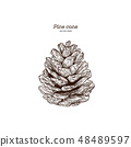 Pine cone, hand draw vector. 48489597