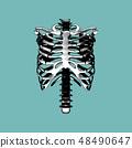 Engraving rib spile bone isolated on green BG 48490647