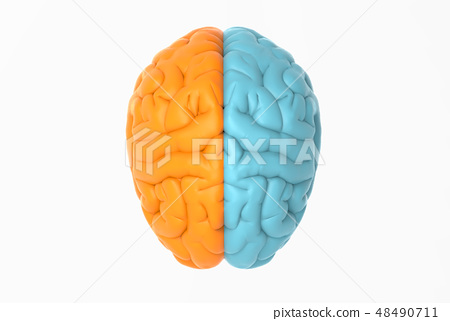 Brain illustration in  orange and blue side color 48490711