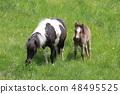 พ่อแม่ของ Pony และลูก 48495525