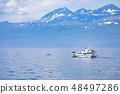 A orca off Rausu 48497286