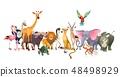 动物 野生生物 矢量 48498929