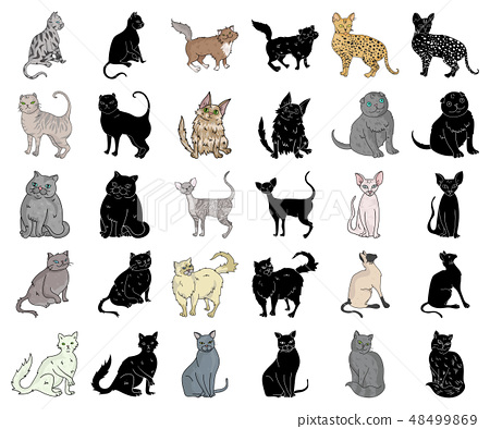 Breeds of cats cartoon,black icons in set collection for design. Pet cat vector symbol stock web 48499869