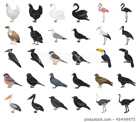 Types of birds cartoon,black icons in set collection for design. Home and wild bird vector symbol 48499975
