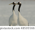 A couple of cranes to synchronize 48505566