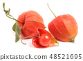husk tomatoes or physalis with leaf isolated on white background 48521695
