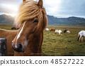 สัตว์,สัตว์ต่างๆ,เหมือนม้า, 48527222