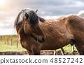 สัตว์,สัตว์ต่างๆ,เหมือนม้า, 48527242