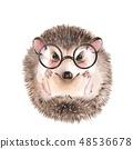 Cute hedgehog in glasses 48536678