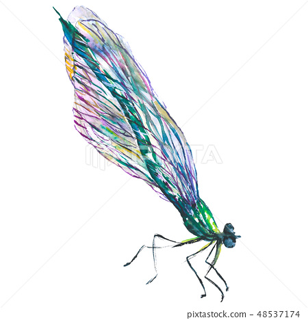 Exotic dragonfly wild insect in a watercolor style isolated. Aquarelle wild insect for background. 48537174