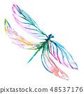 蜻蜓 虫子 水彩画 48537176