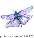 蜻蜓 虫子 水彩画 48537177
