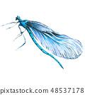 蜻蜓 虫子 水彩画 48537178