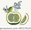 Orange illustration. Vintage citrus 48537818