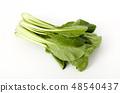 日本芥末菠菜 48540437