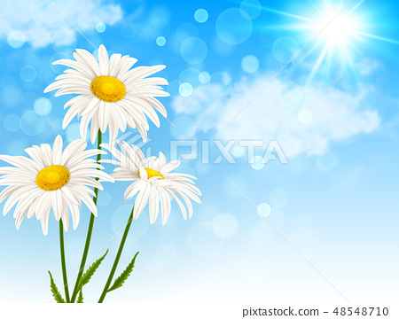 White daisy flowers and clouds 48548710