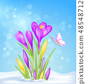 Spring flowers in the snow 48548712
