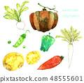 蔬菜水彩畫 48555601